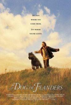 Ver película Dog of Flanders