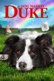 Un amico di nome Duke online