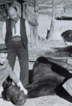 Ver película Edgar Neville: emparedado entre comillas