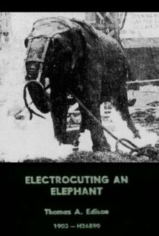 Electrocuting an Elephant streaming en ligne gratuit