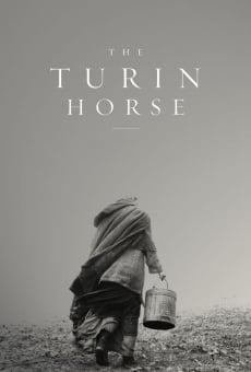 Ver película El caballo de Turín