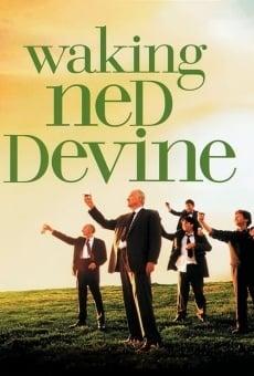 El divino Ned online