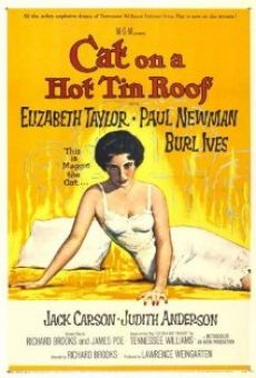 Gato en un techo de zinc caliente