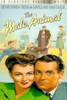 Ver película El macho