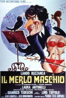Ver película El mirlo macho