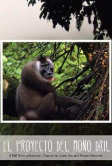 El Proyecto del Mono Dril