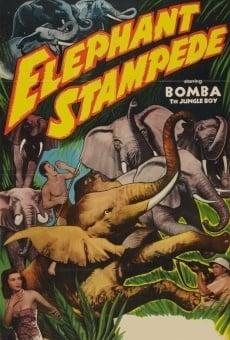 Ver película Elephant Stampede