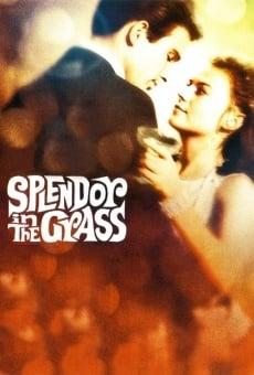 Ver película Esplendor en la hierba