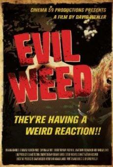 Ver película Evil Weed