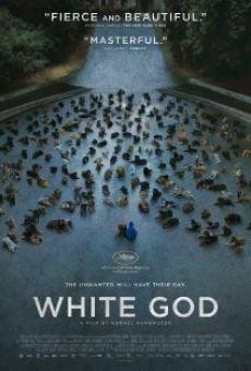 Ver película Fehér isten