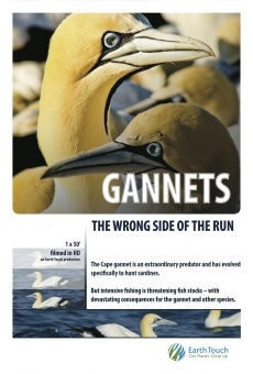Ver película Gannets: The Wrong Side of the Run