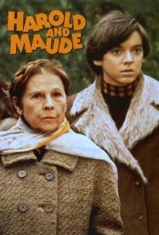 Ver película Harold y Maude
