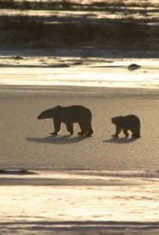 Watch Ice Bear online stream