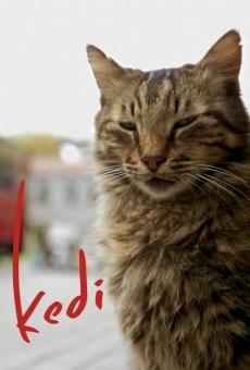 Kedi online kostenlos