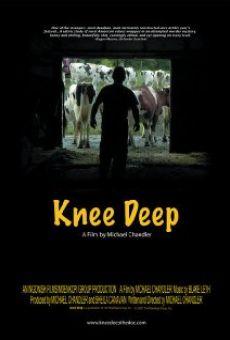 Ver película Knee Deep