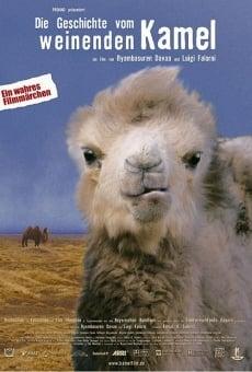 La storia del cammello che piange online