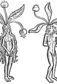 La Mandragola - The Mandrake on-line gratuito