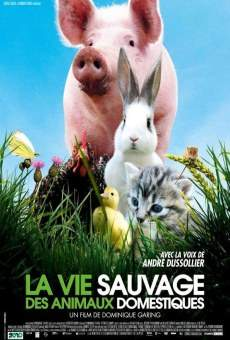 La vie sauvage des animaux domestiques en ligne gratuit
