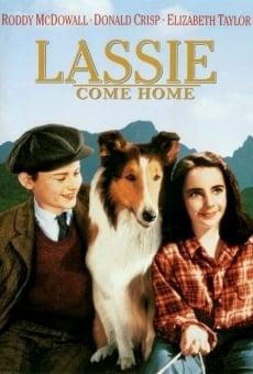 Ver película Lassie