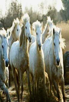 Le songe de chevaux sauvages online streaming