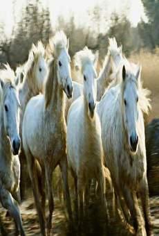 Le songe de chevaux sauvages online