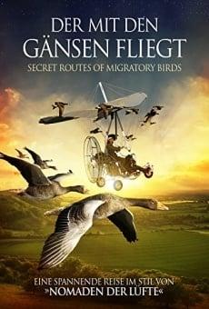 Ver película Les routes secrètes des oiseaux migrateurs