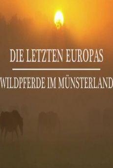 Die letzten Europas Wildpferde im Münsterland (Europe's Last Wild Horses) on-line gratuito