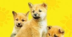 Película 7 Days of Himawari & Her Puppies