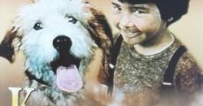 Ver película A Dog in a Drawer