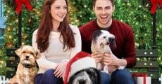 Película A Dogwalker's Christmas Tale