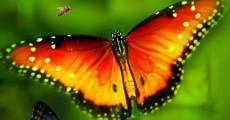 Filme completo Disneynature's Wings Of Life
