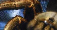 Película Arachnia