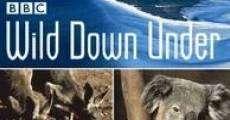 Ver película Australasia salvaje