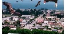 Película Birdemic: Shock and Terror
