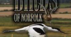 Película Birds of Norfolk: A Bird Watchers Dream