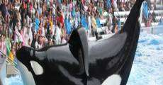 Filme completo Blackfish: Fúria Animal