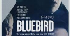 Bluebird streaming