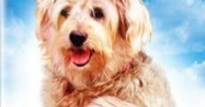 C.H.O.M.P.S. El super perro