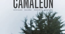 Camaleón streaming