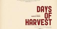 Película Días de cosecha