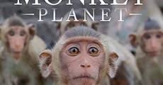 Película Descubriendo a los monos