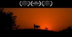Película Donkey Love