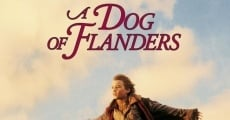 A Dog of Flanders film complet