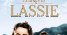 Filme completo A Coragem de Lassie