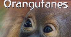 Película El diario de los pequeños orangutanes