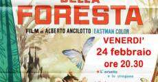 L'incanto della foresta streaming