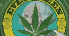 Película Evergreen: The Road to Legalization in Washington