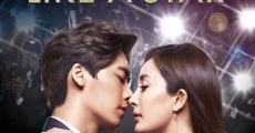 Película Fall in Love Like a Star