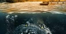 Película Freshwater