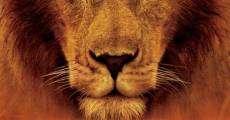 Ver película Grandes felinos africanos: el reino del coraje
